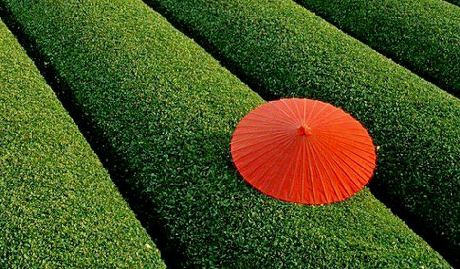 ჩინური ჩაი და მისი სწორი აღქმა