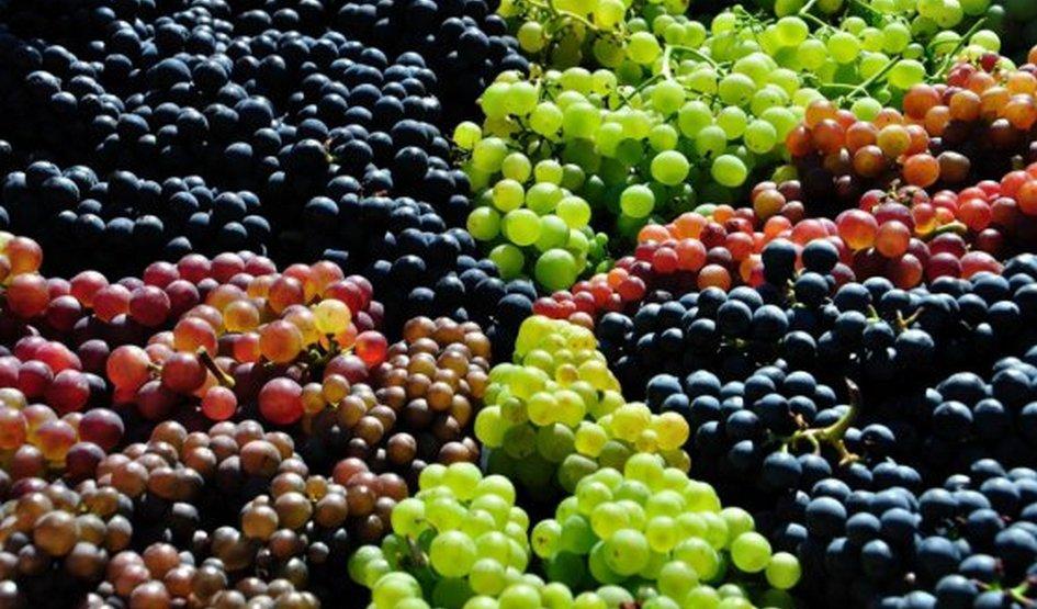 ყირგიზეთში 7 ქართული ადგილწარმოშობის ღვინო დარეგისტრირდა